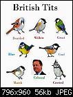 Birdwatching.-12065889_10153276839400847_5059478262838325764_n-jpg